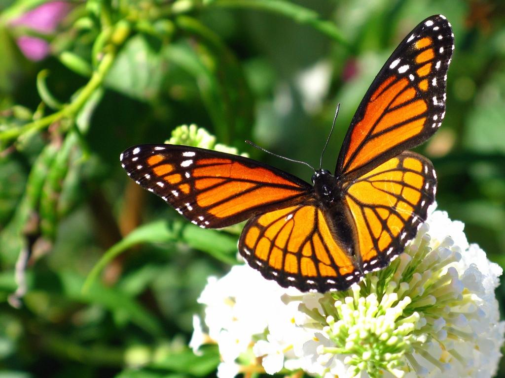 Patada De Caballo Fondos Animados: Patada De Caballo: Mariposas