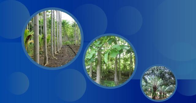 Investasi-pohon-paling-menguntungkan