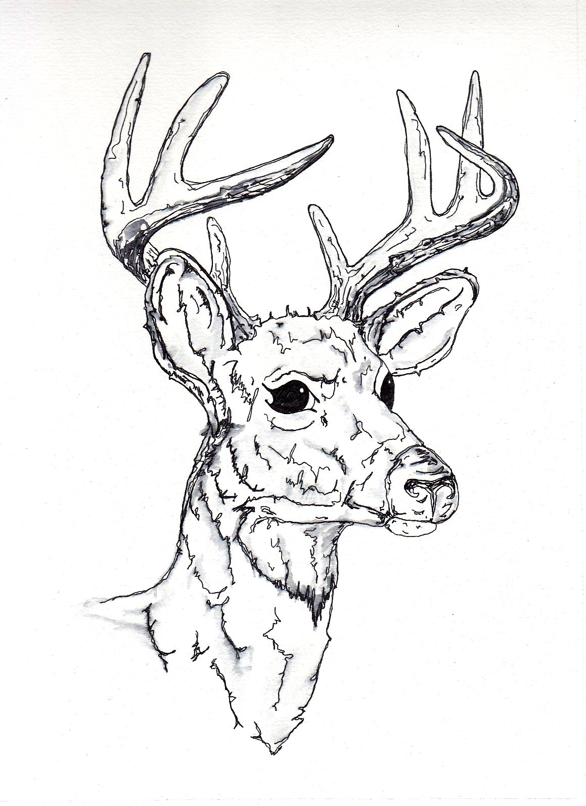 Yecats Wolliw: Stag drawings
