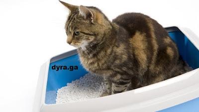 http://www.dyra.ga