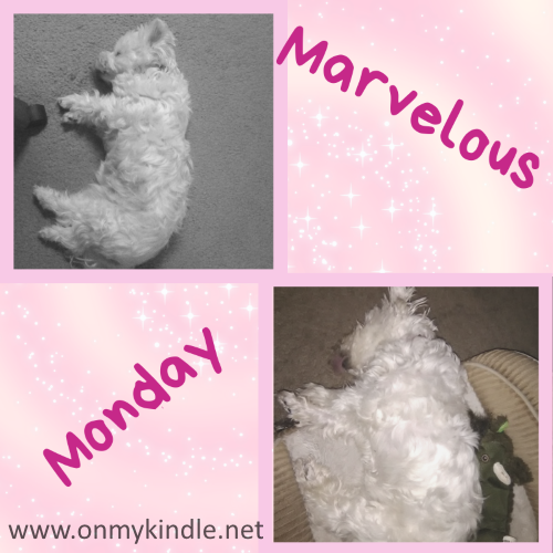 Marvelous Monday with Lexi: Dec 17th Edition!