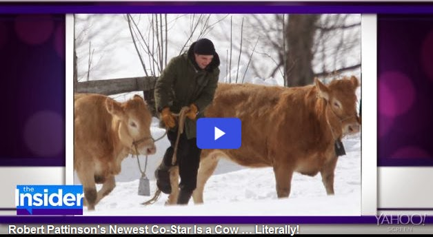 http://celebrity.yahoo.com/blogs/celeb-news/robert-pattinson-newest-co-star-cow-literally-011606801.html?soc_src=mediacontentstory