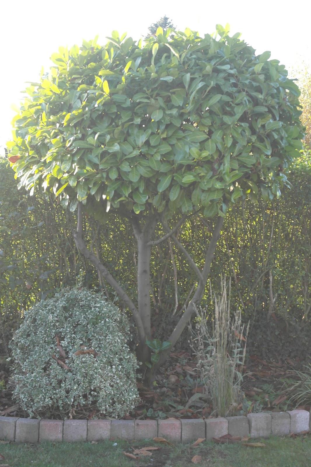 mit lille gods: De dejlige stedsegrønne planter i haven...........også med blomst