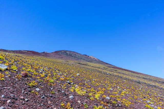 オンタデの草紅葉~富士山