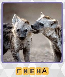 две гиены стоят рядом на 3 уровне в игре 600 слов