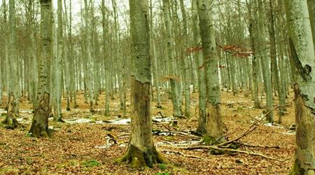 शहर से उठे जंगल के सवाल | EDITORIAL