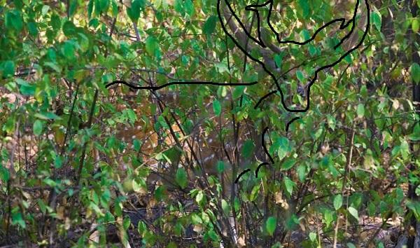 Imagen de Animal camuflado: Descubre el animal oculto entre las plantas 15