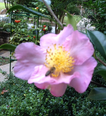 bee, beekeeping, climate, foraging, pollen,