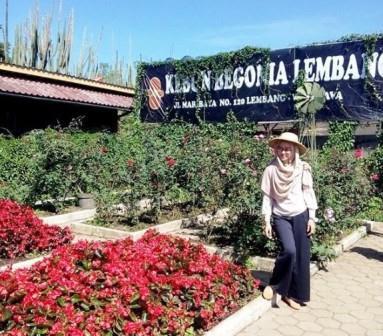 Wisata Romantis Taman Begonia, Kebun Bunga Lembang, Bandung