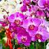 5 Plantas poderosas para se ter em casa e afastar as energias negativas