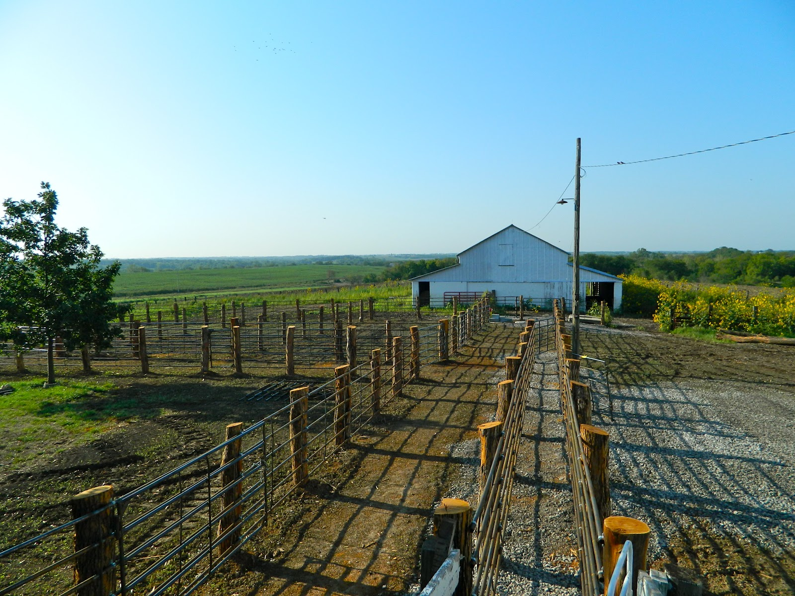 how to build a cattle corral
