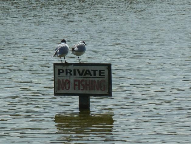 Bursledon Blog: Private Fishing