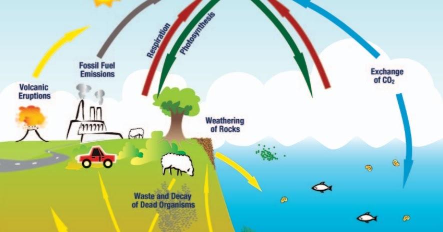 29+ Gas penyumbang pemanasan global kedua setelah karbon dioksida adalah information