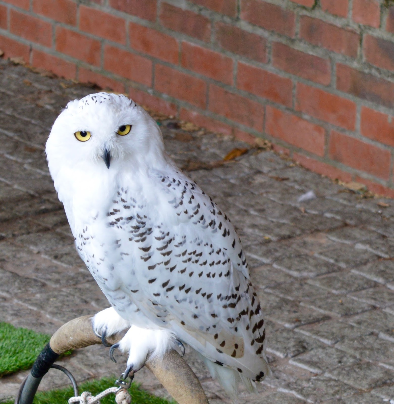 Half Term Hocus Pocus at Preston Park | The North East's very own Diagon Alley - Hedwig owl