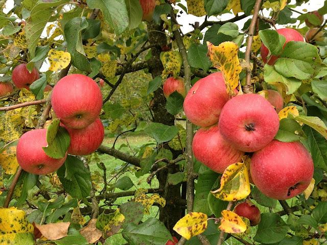 Cara yang Benar untuk Merawat Pohon Buah agar Sehat dan Berbuah Banyak