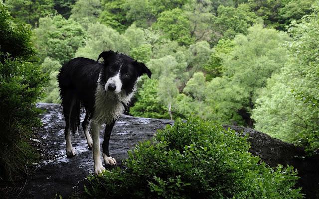 Zwart witte hond in het bos