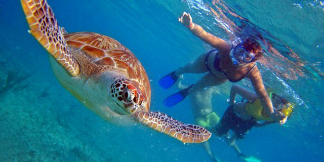 Snorkel with turtles cruise excursion