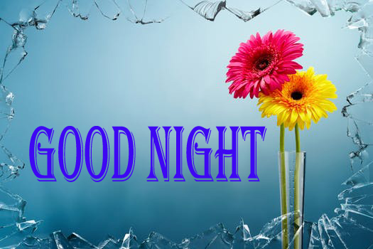 A Very Good Night Flower