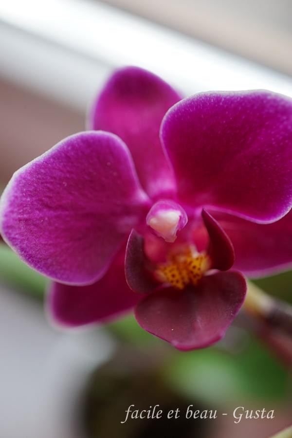 facile et beau gusta lila orchidee. Black Bedroom Furniture Sets. Home Design Ideas