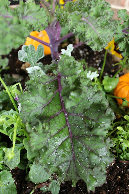 7 Fall Gardening Tasks
