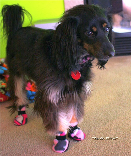 Sewing Projects for Pets - Fleece Dog Booties