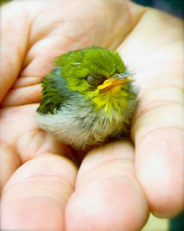 Funny animals of the week - 14 February 2014 (40 pics), cute little bird in palm