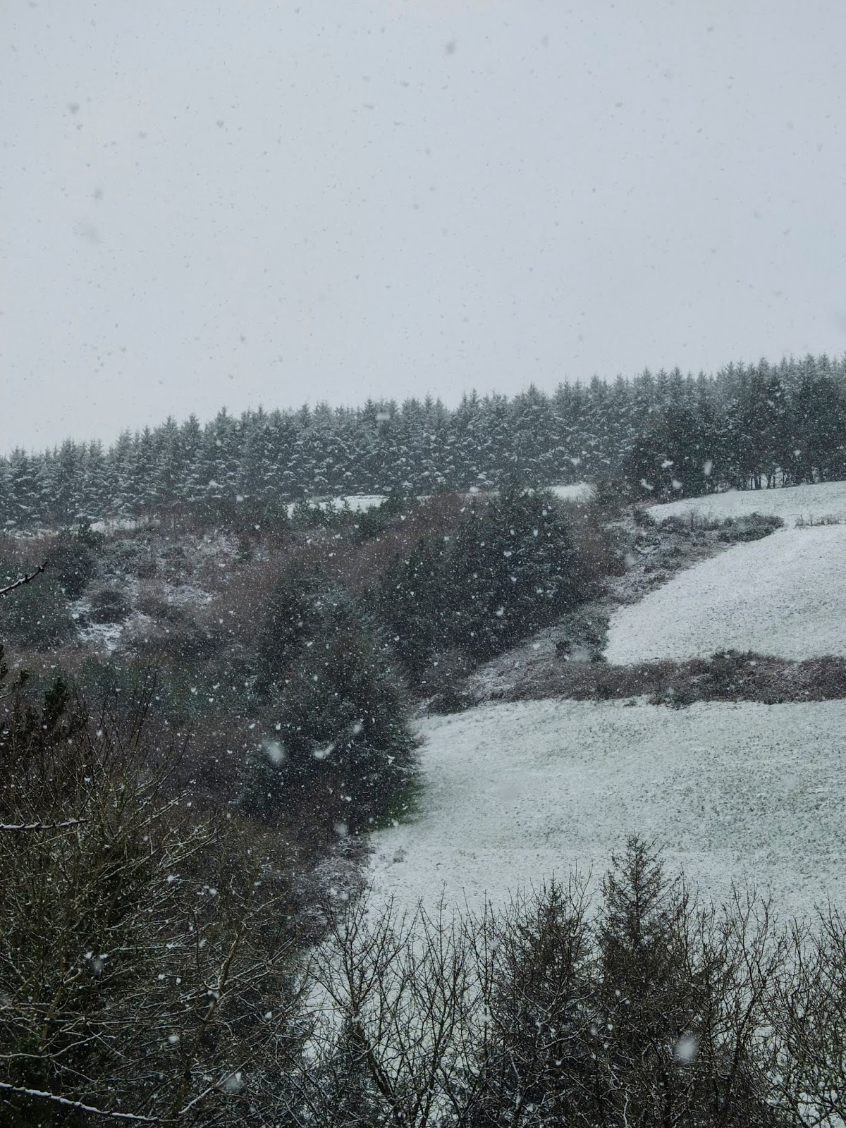 Snow beginning to fall on trees and fields on a hillside in Duhallow .