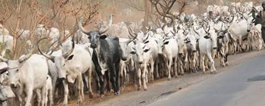 Nigerians To Protest Secret MOU Between Fulani Herdsmen And Some Companies