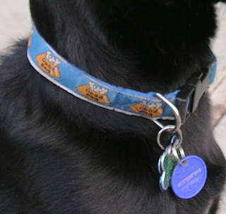 Different Dog Training Collars for Different Ways to Train Your Dog