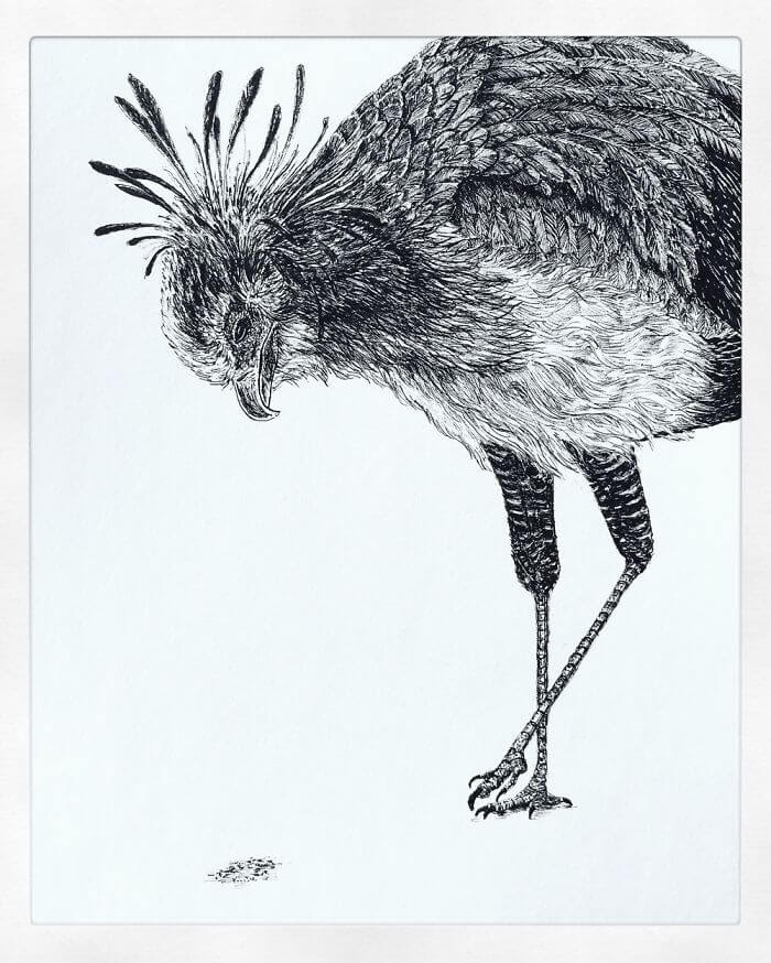 01-Secretary-Bird-Bas-Geeraets-Black-and-White-Drawings-of-Birds-www-designstack-co