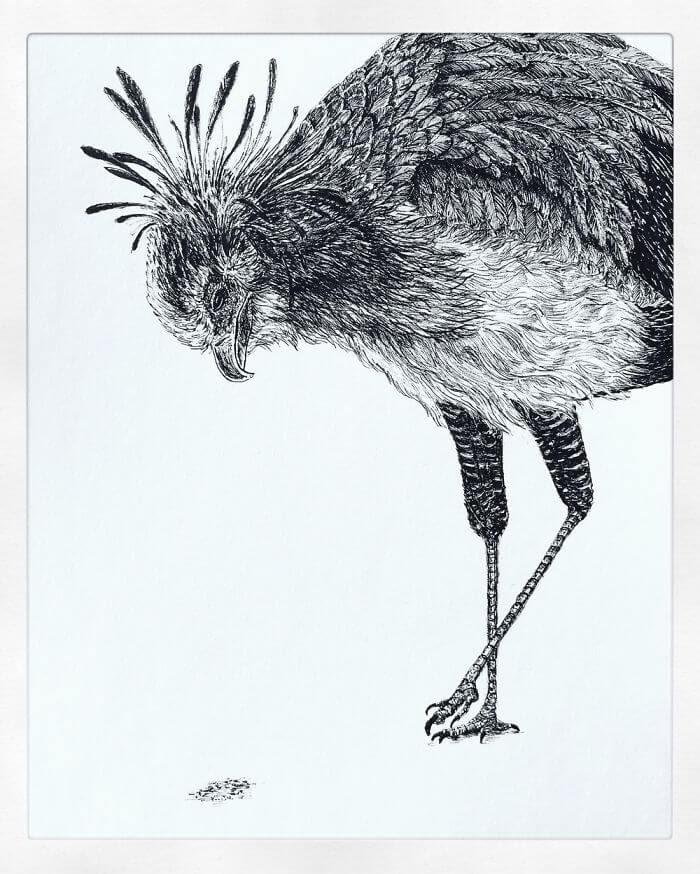 01-Secretary-Bird-Bas-Geeraets-Black-and-White-Drawings-of-Birds-www-designstack-co