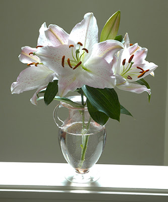 lilies from sun valley floral farms
