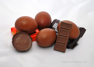 marans eggs and chocolate