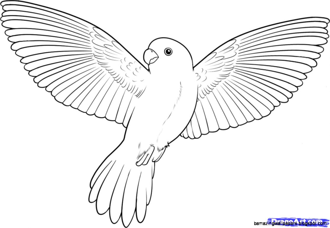 Bird Drawing | Amazing Wallpapers