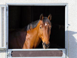 Bay horse with a white star sticking his head out of a stable