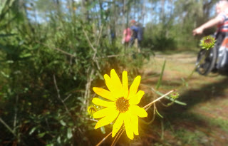 Wilflowers in Dade Battlefield Historic State Park, Florida USA