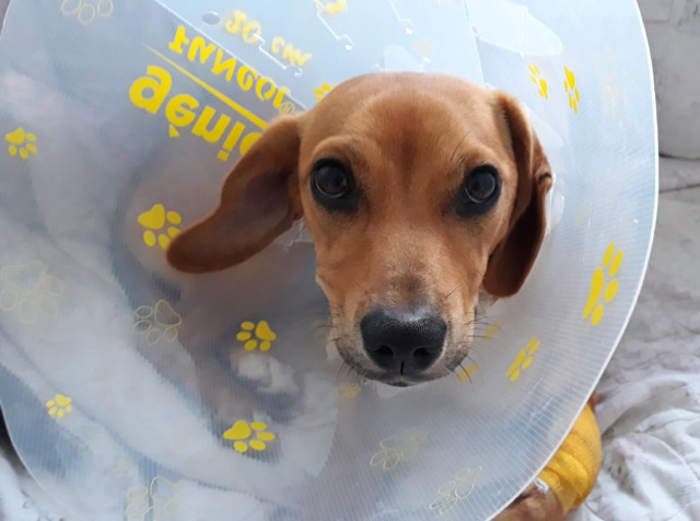 Cone head dog
