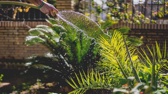 Sposoby i wskazówki do podlewania ogrodu