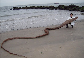 В Японии на берегу нашли странное чудовище