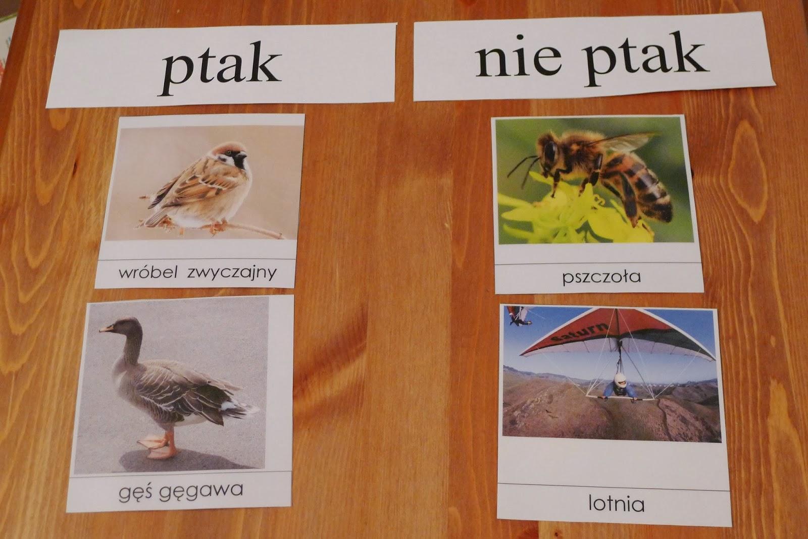 Wczesna Edukacja Zosi świat Zosi W Pigułce Ptasie Radio
