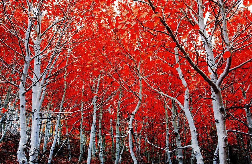autumn-photography-9