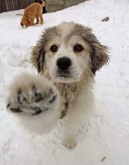 Cute White Puppy in Snow Fall