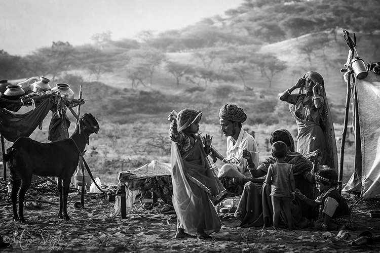 Nomadic Life, Pushkar fair.