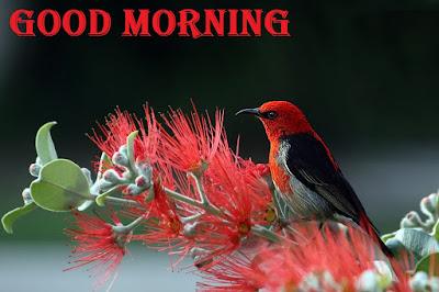 Good Morning New Pic