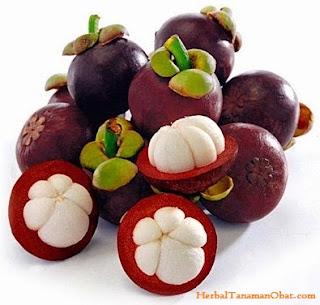 manggis, daun manggis, kulit manggis, obat diare, catechins, xanthone, antikanker