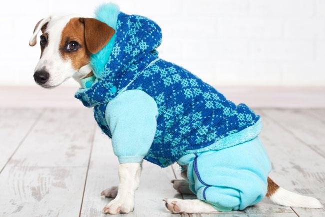 Sweterki dla psa