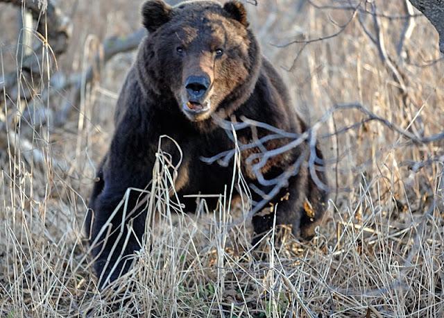 встреча +с медведем +в лесу