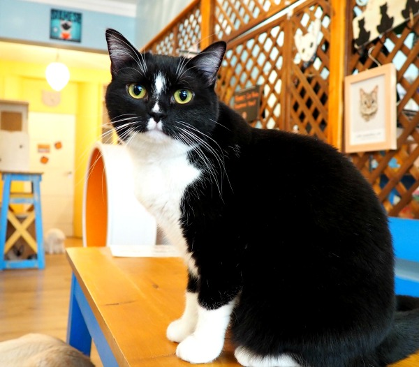 paris cat café le chat mallows
