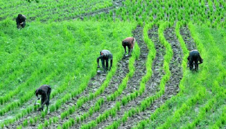 Farmers To Pay 5% Interest For Loans Collected ::FG