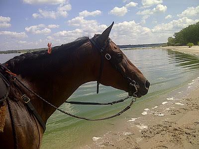 Horsetrailriders Com Horse Trails
